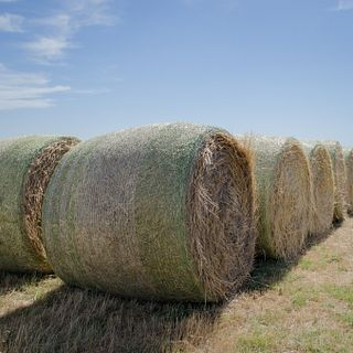 2017 ESAP Photos - Munson Angus Farms - Region VII - Kansas