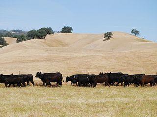 Yolo Land & Cattle CO