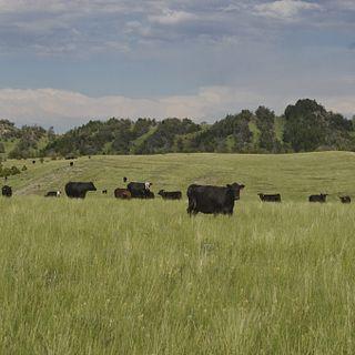 American Fork Ranch