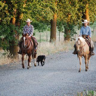 Leavitt Lake Ranches