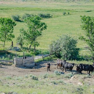 Cherry Creek Ranch