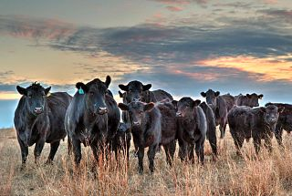 CattleTales Summer Photo Contest - All Entries