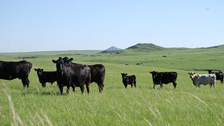 Center of the Nation Cattle Company