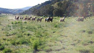 Della Ranches