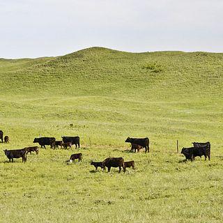 Switzer Ranch