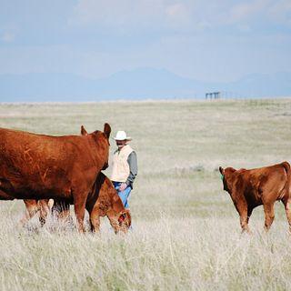 Veseth Ranch
