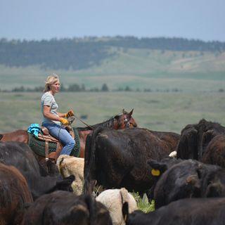 Bold Ranch
