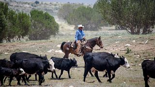2017 ESAP Winner - Jim O'Haco Cattle Company - Region VI - Arizona