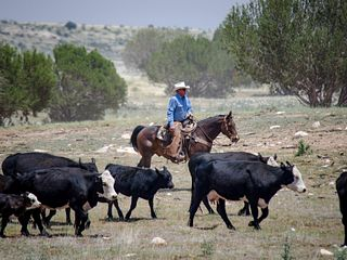 2017 ESAP Winner - Jim O'Haco Cattle Company - Region VI - Arizona