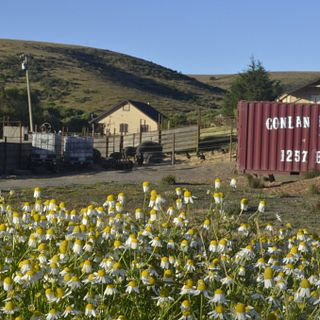Conlan Ranches-California True Grass Farms