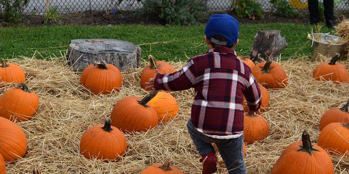 Pumpkin-Patch-daycare-fall-2017