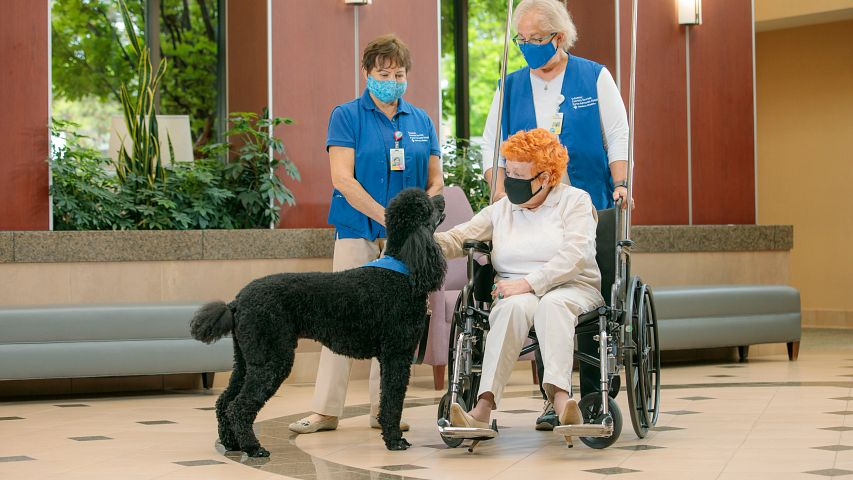 Dog therapy with patient and volunteers