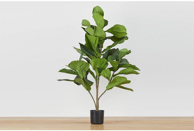Mia Fiddle Fig Tree