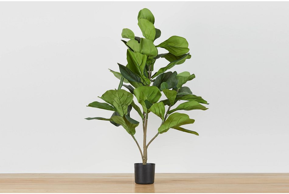 Mia Fiddle Fig Tree