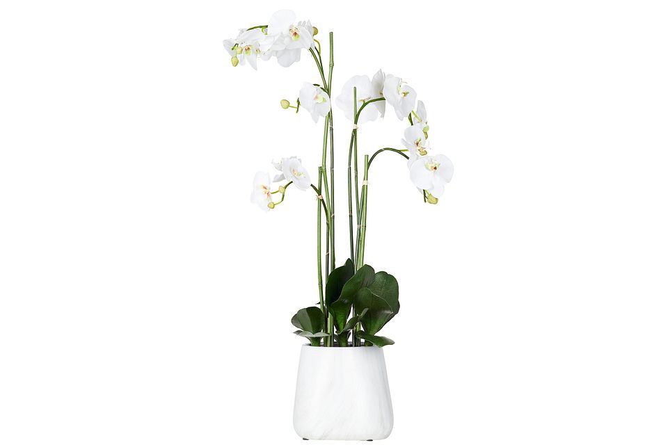 Phalaenopsis In Narrow Pot White Large Orchid
