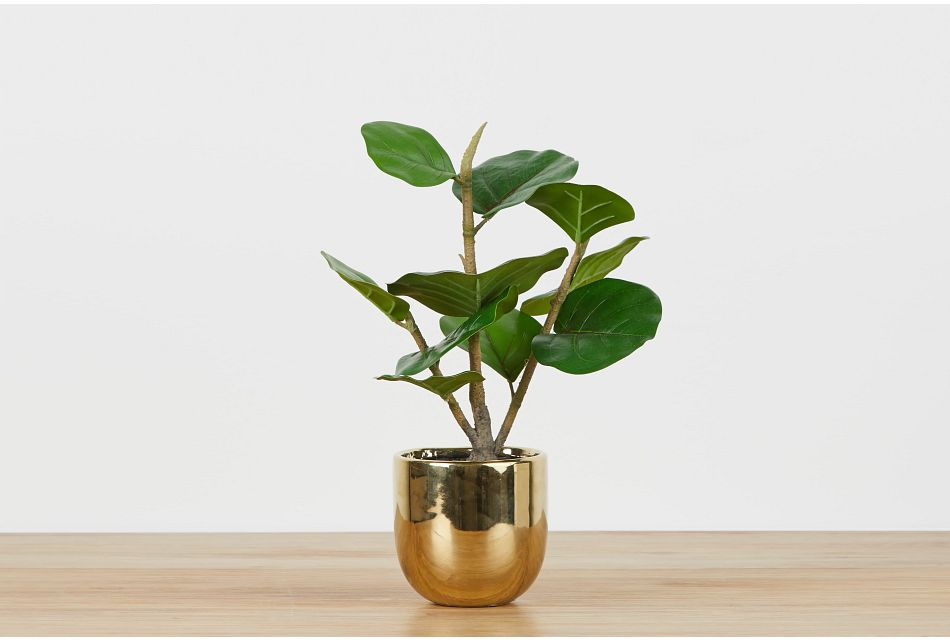 Henry Gold Fiddle Fig Tree