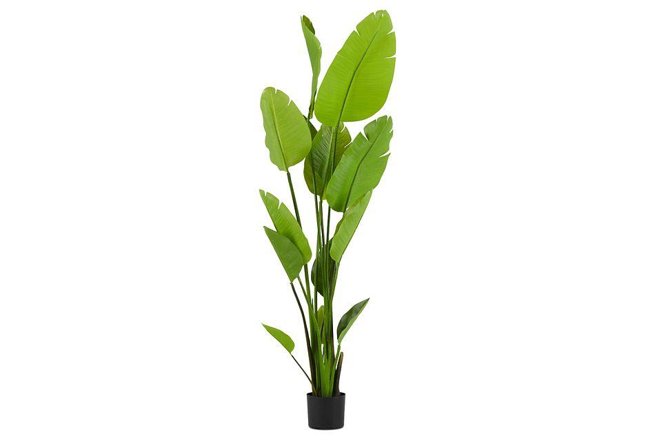 Gunther 5' Palm