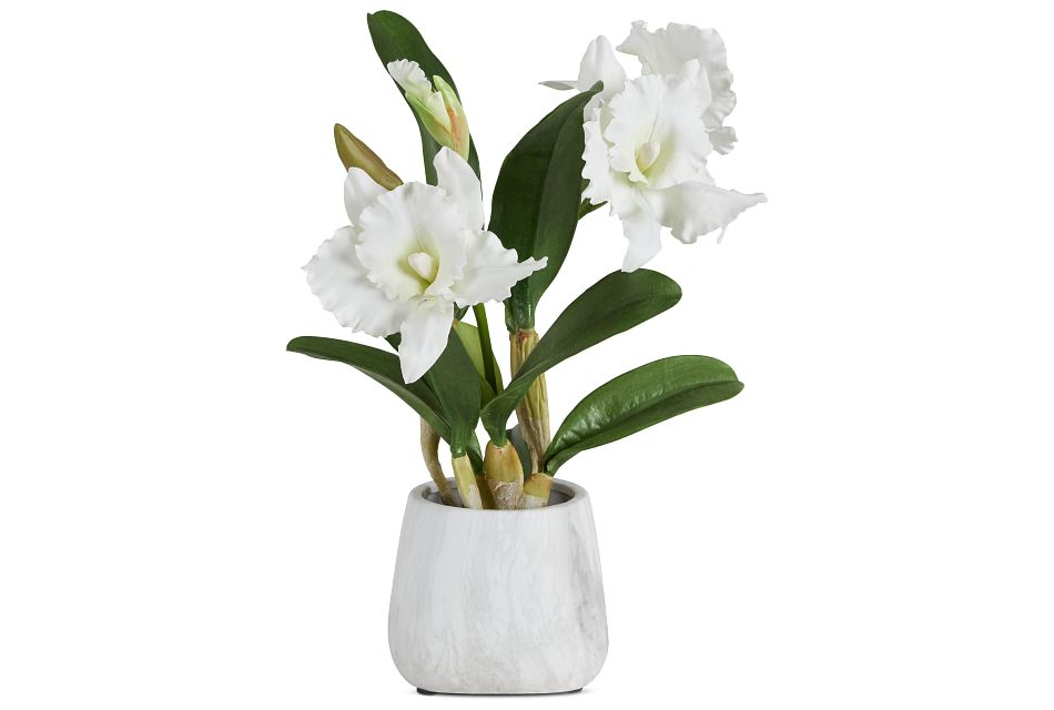 Cattleya White Orchid,  (1)