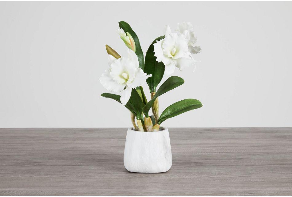 Cattleya White Orchid,  (0)