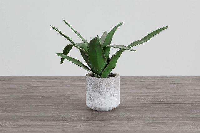 Agave Succulent (0)