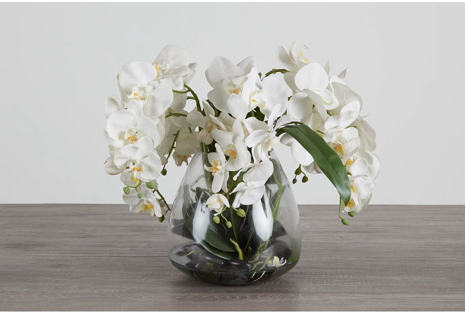 Phalaenopsis In Narrow Pot White Orchid,  (0)