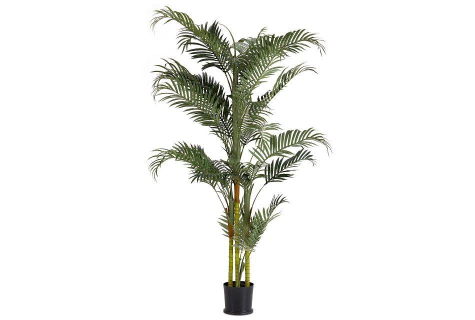 Areca Palm,  (1)