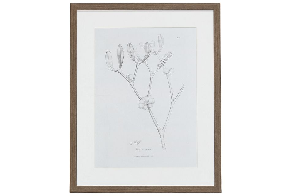 Sprout Gray Framed Wall Art
