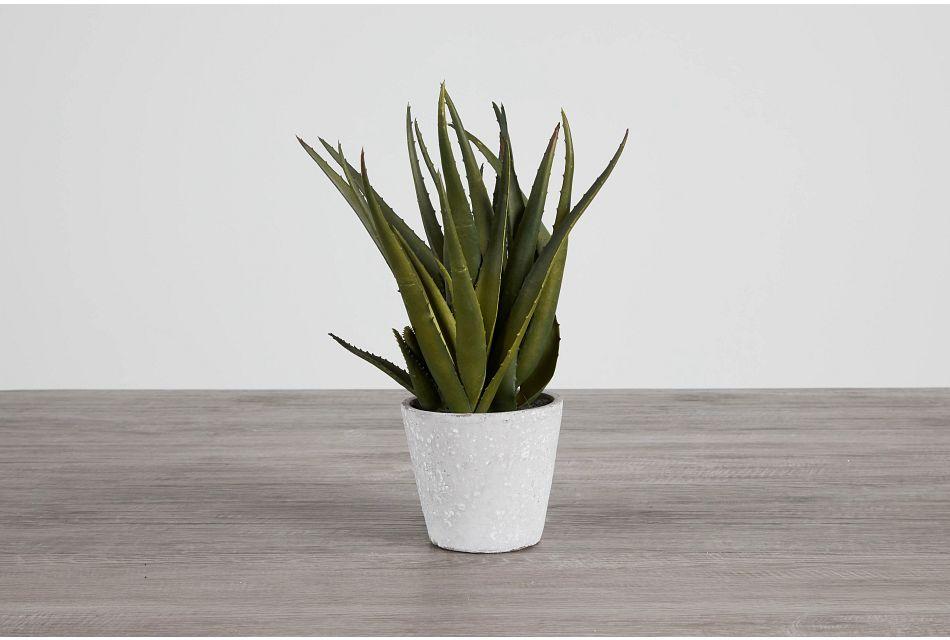 Aloe Small Succulent