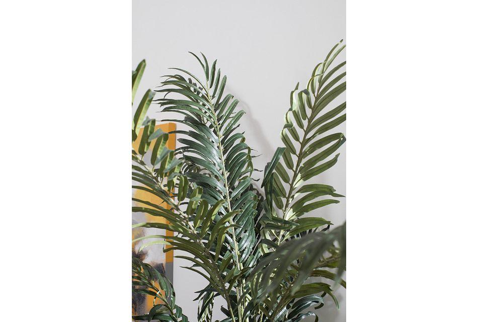Areca Palm,  (3)