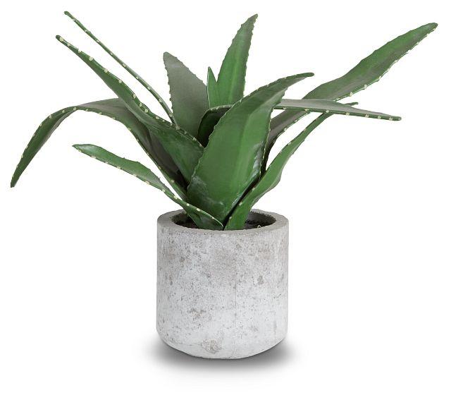 Agave Succulent (1)