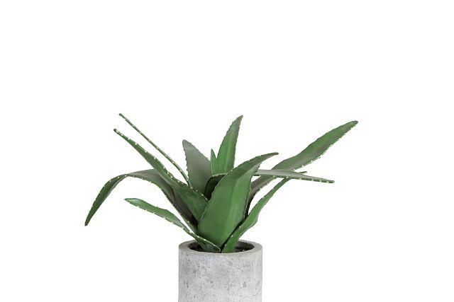 Agave Succulent (2)