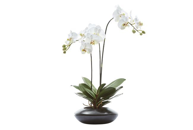 """Phalaenopsis In Narrow Pot White 31"""" Orchid"""