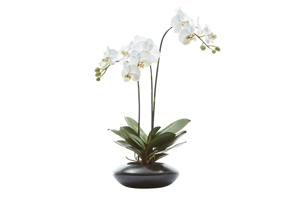 "Phalaenopsis In Narrow Pot White 31"" Orchid"
