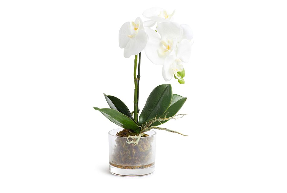"Phalaenopsis In Narrow Pot White 13"" Orchid"