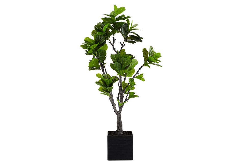 Eva 6' Fiddle Fig Tree,  (1)