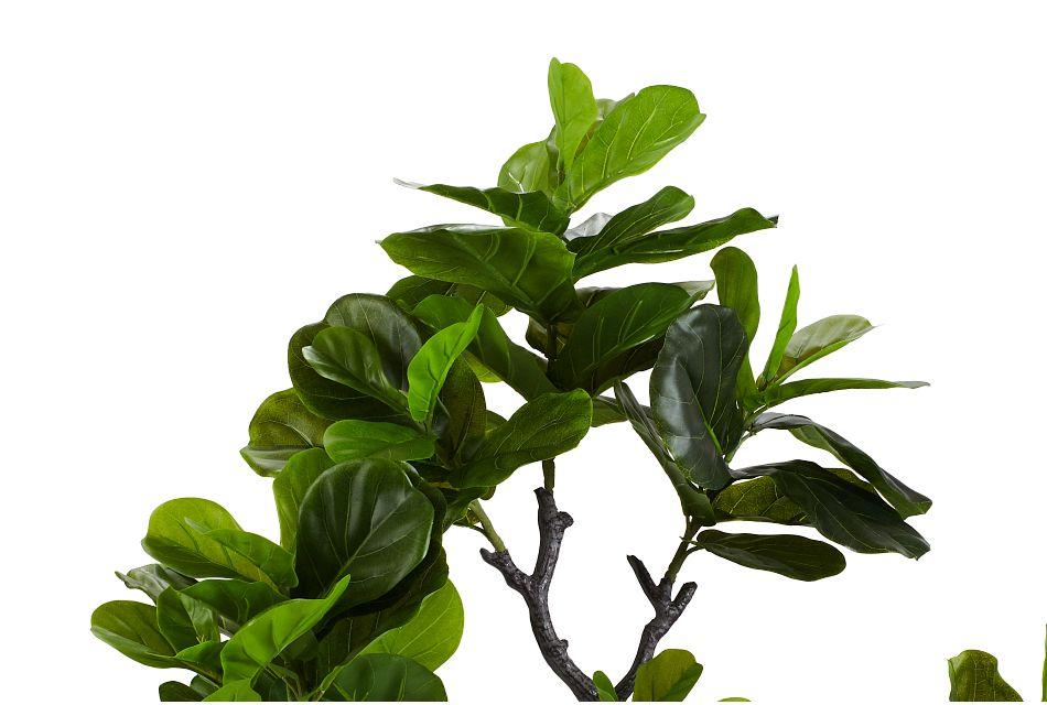 Eva 6' Fiddle Fig Tree,  (2)