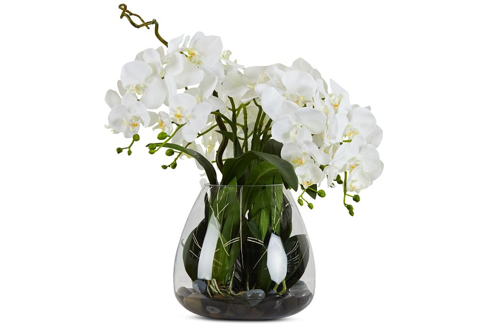 Phalaenopsis In Narrow Pot White Orchid,  (1)