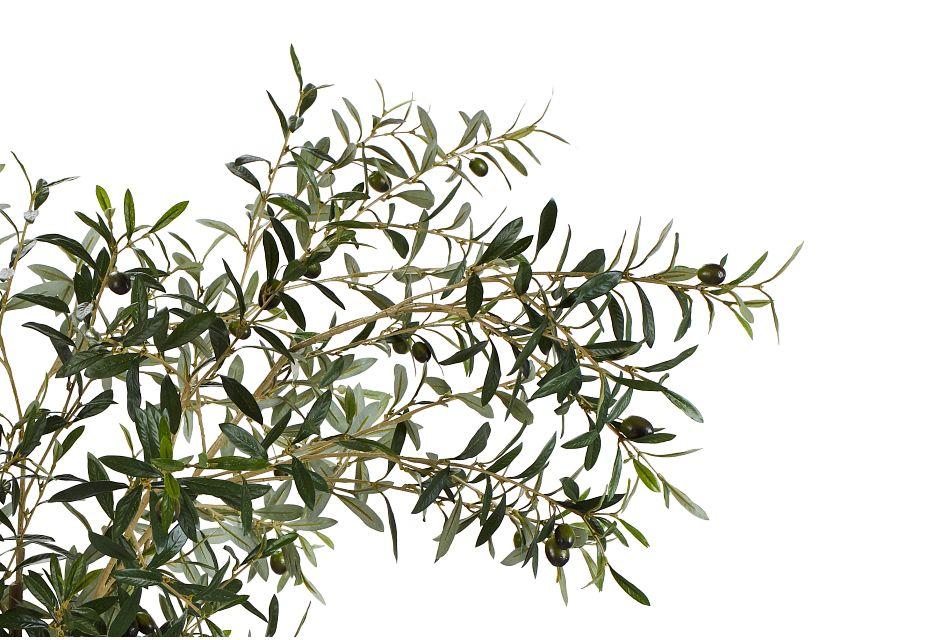 Ollie 7' Olive Tree,  (2)