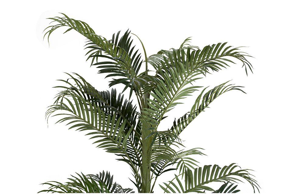 Areca Palm,  (2)