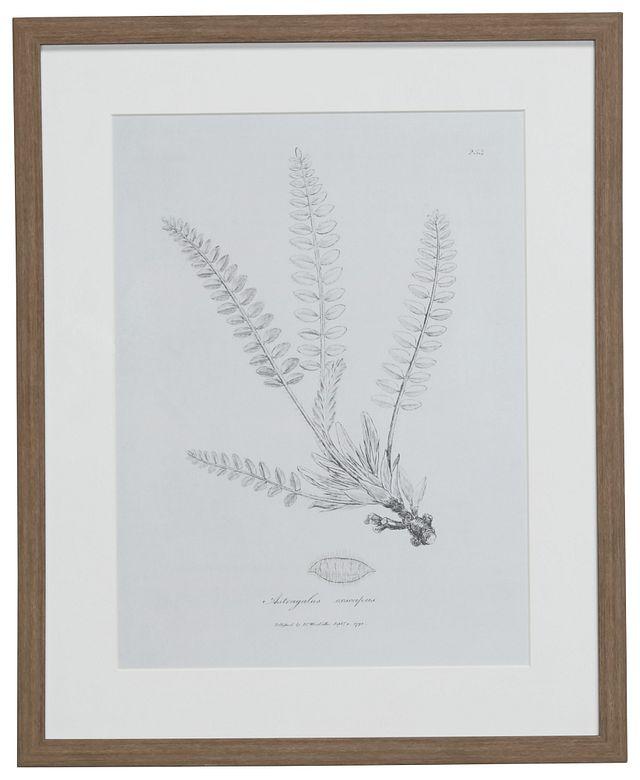 Needle Gray Framed Wall Art (0)