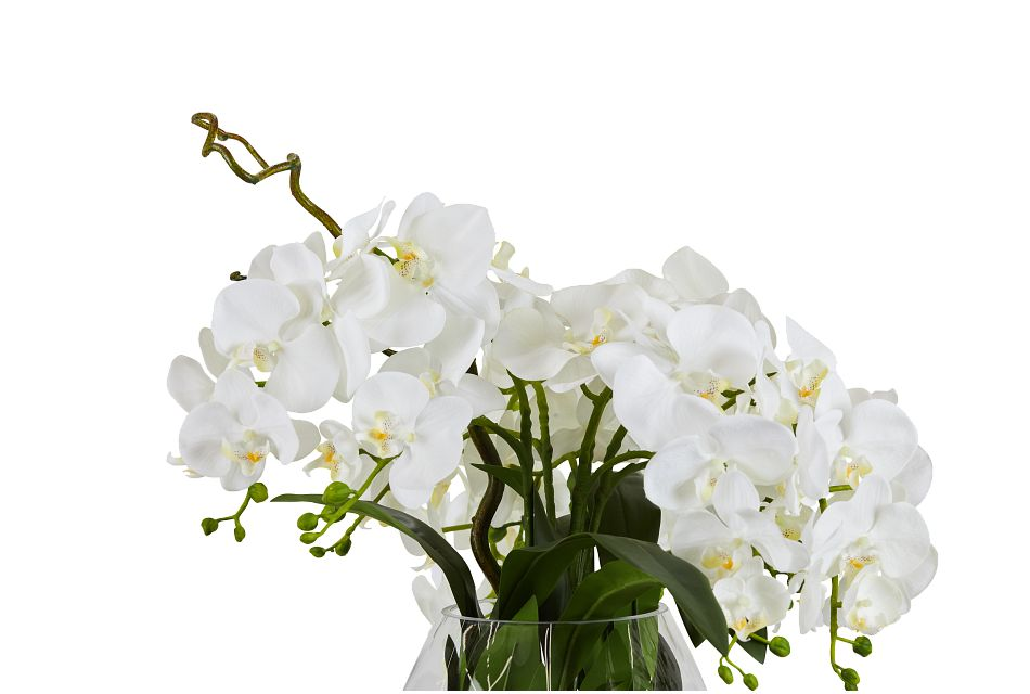 Phalaenopsis In Narrow Pot White Orchid,  (2)