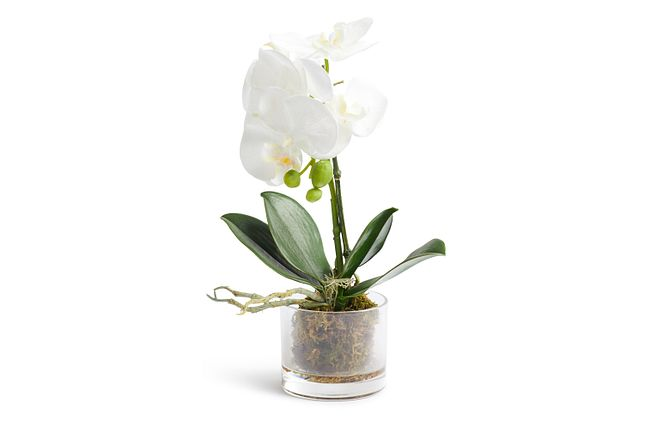 """Phalaenopsis In Narrow Pot White 13"""" Orchid"""