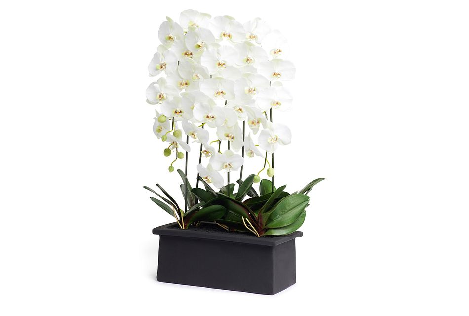 "Phalaenopsis In Narrow Pot White 42"" Orchid"