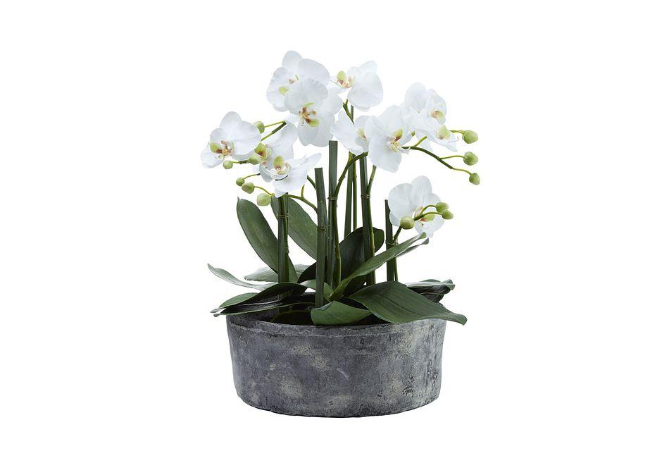 "Phalaenopsis White 19"" Orchid"