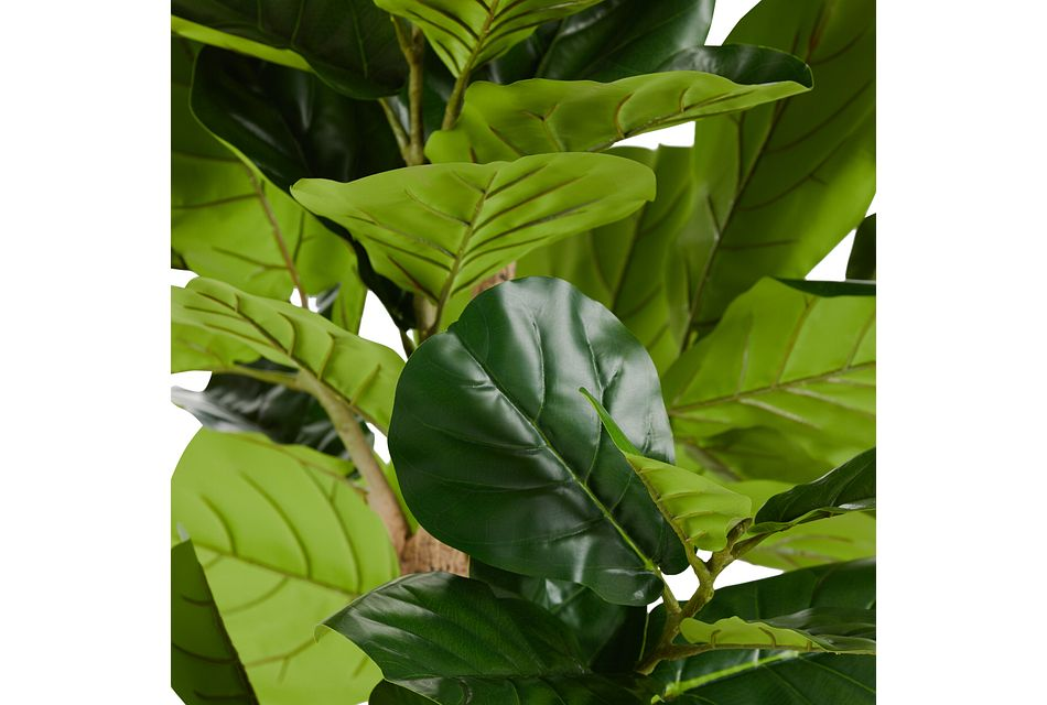 Ida 8' Fiddle Fig Tree