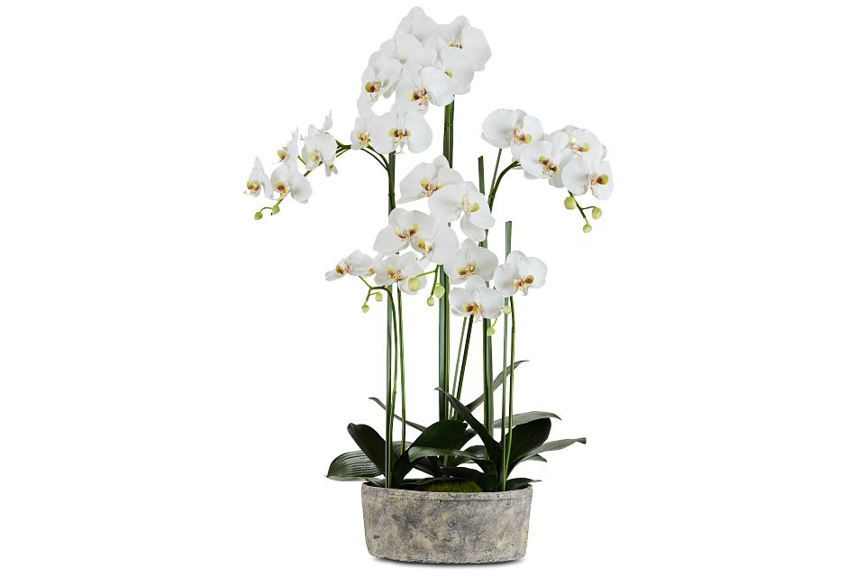 "Phalaenopsis In Narrow Pot White 37"" Orchid"