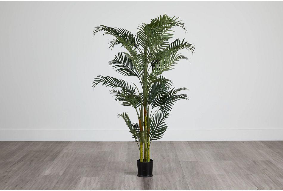 Areca Palm,  (0)