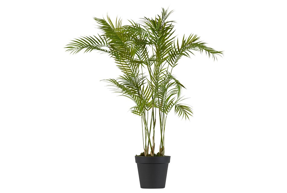 Kyd Palm
