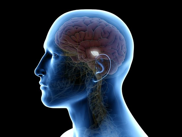 An image of a human head outline with the midbrain highlighted in a bright white color to indicate the location of dopamine neurons for Parkinson's Disease Research.