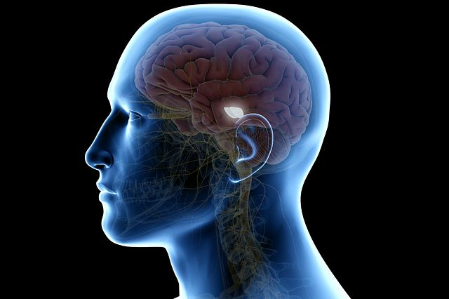 An image of a human brain inside a human head with the mid-brain section highlighted.